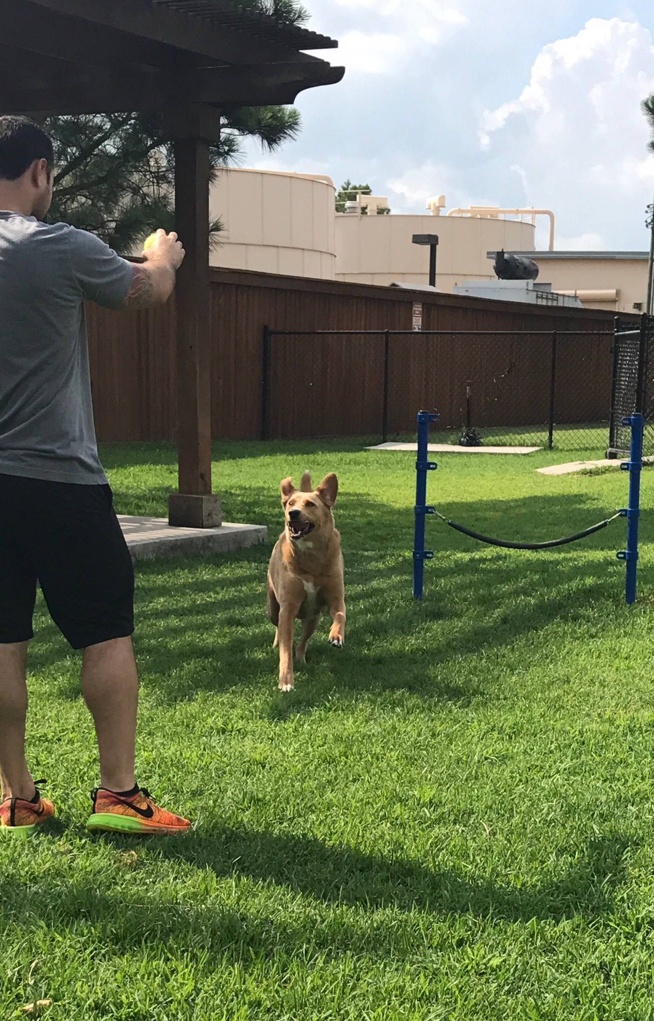 8 Calming Tips, Dog Exercise